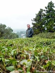 Jardín con plantas de te en Rize