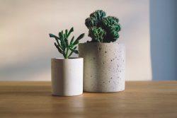 Haxo plant terrarium