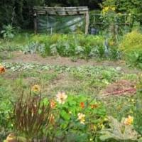 Mulch Total -  der Garten von Kurt Kretschmann heute