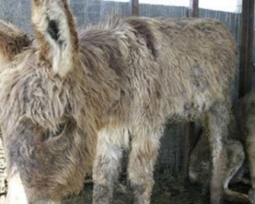 Caged Wolf Form Unlikely Friendships With a Donkey
