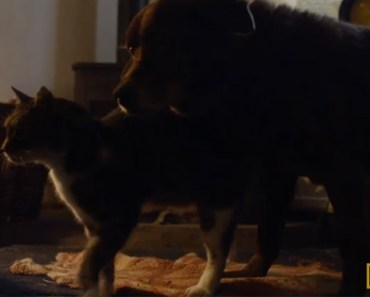Blind and Deaf Dog Finds Friendship from Seeing Eye Cat