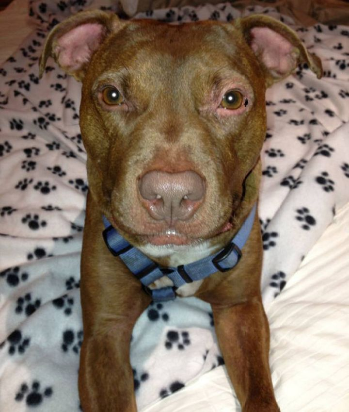 In June 2014, Patrick the Pit Bull found a forever home and was adopted by a family that gives him the love and attention he deserves.