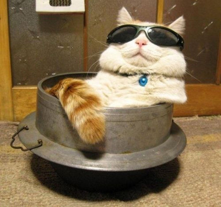 """30 Funny Cat Pictures - """"I am so much cooler than you. Deal with it."""""""