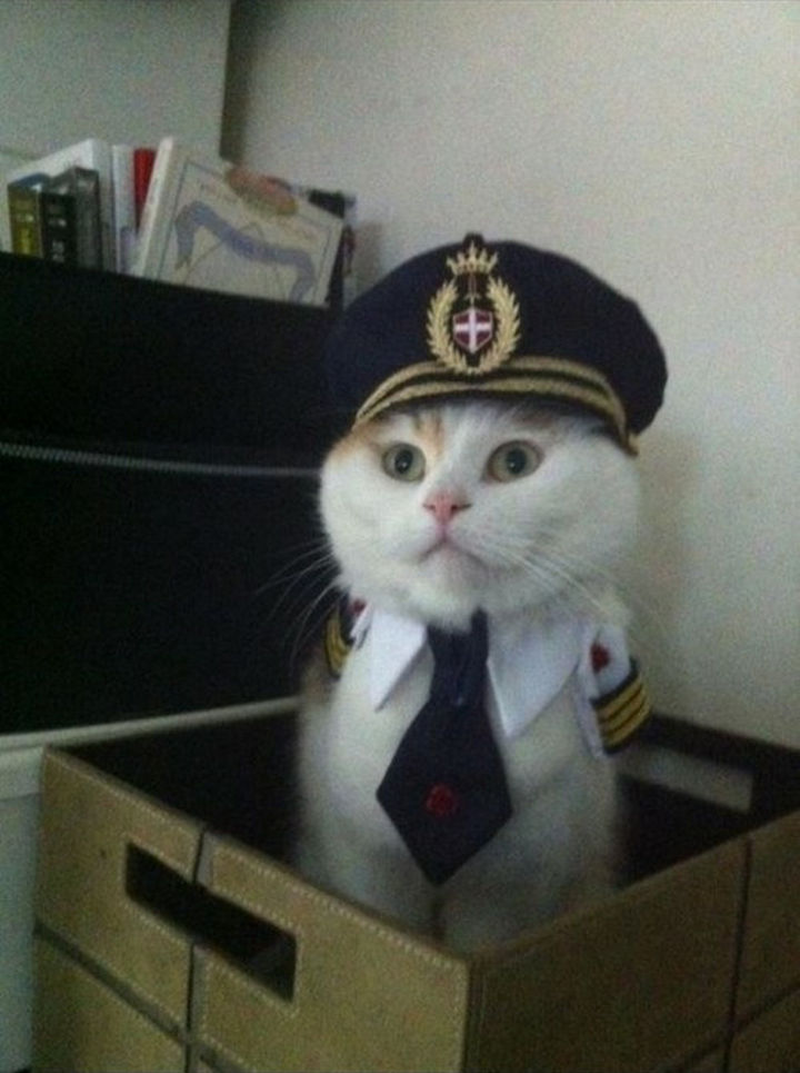 """30 Funny Cat Pictures - """"All aboard!!"""""""