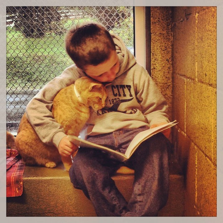 """30 Funny Cat Pictures - """"Why does this book have so many dog pictures?"""""""