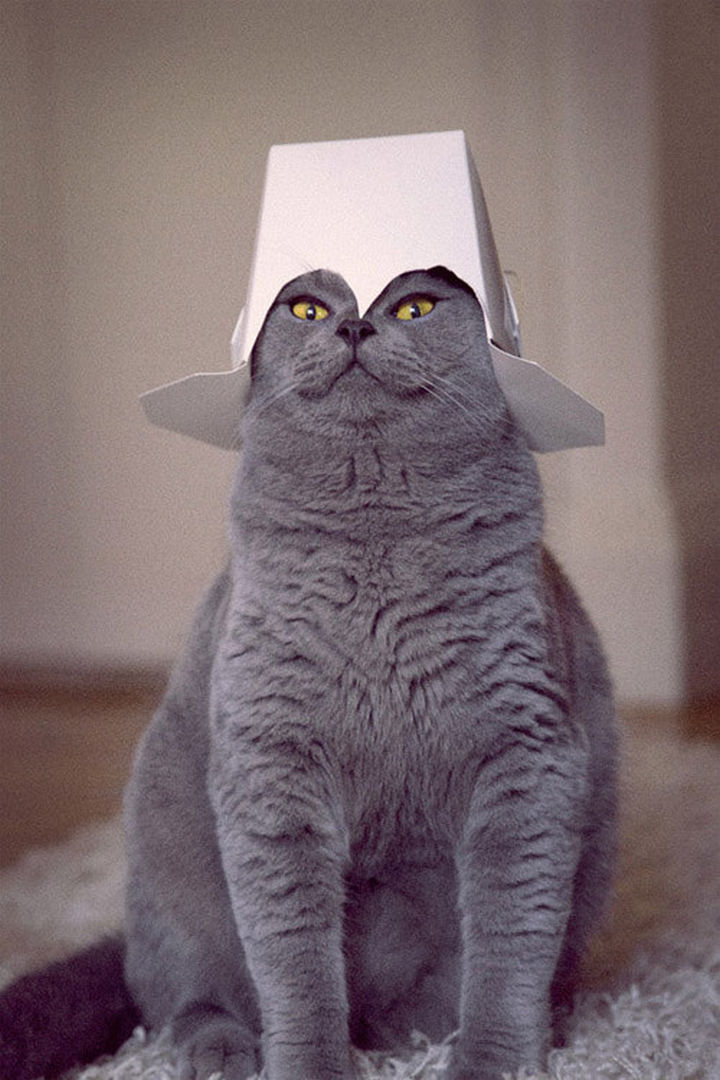 """30 Funny Cat Pictures - """"I am your new master, bow before me human."""""""