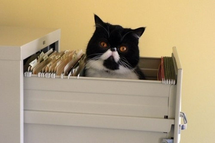"""30 Funny Cat Pictures - """"Why am I filed under 'liabilities' ?"""""""