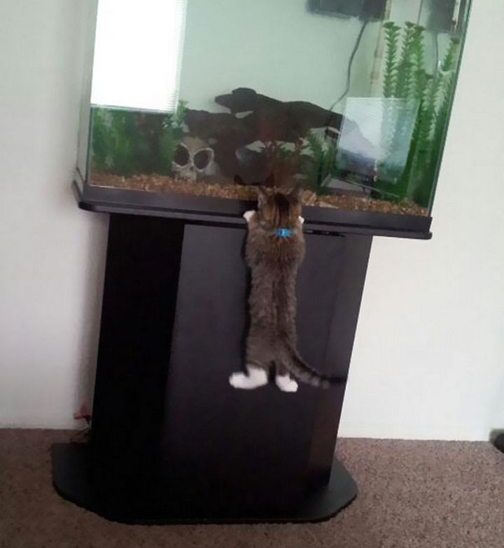 """30 Funny Cat Pictures - """"Must. Get. Fish."""""""