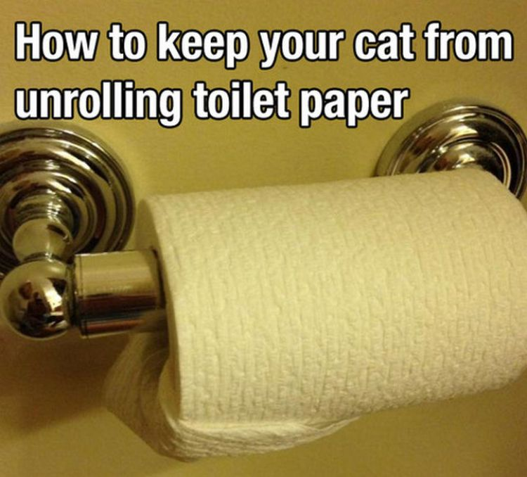 52 Cleaning and Life Hacks - How to keep your cat from unrolling toilet paper.