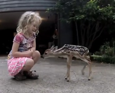 Newborn Fawn Comes out of the Woods to Meet a Little Girl.