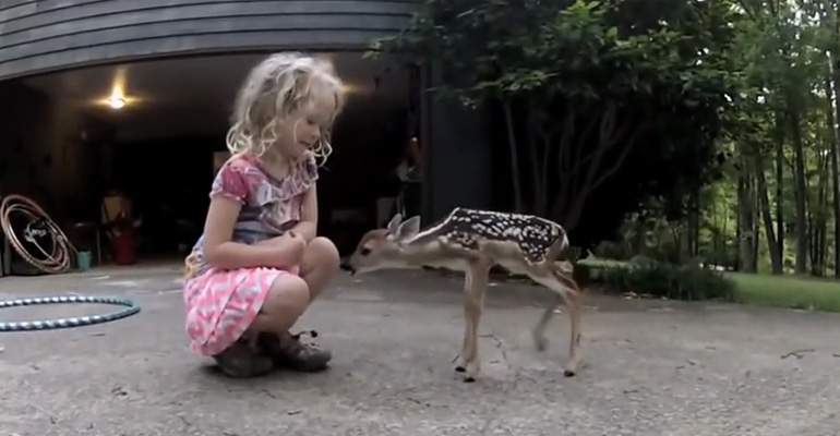 """Newborn Fawn Comes out of the Woods to Meet a Little """"Deer Whisperer"""" Girl."""