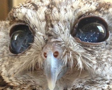Zeus Is a Blind Owl but You Can See the Universe in His Eyes.