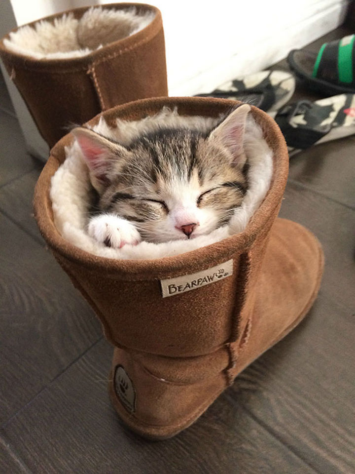 24 Cats Asleep in a State of Bliss - The real Puss in Boots.