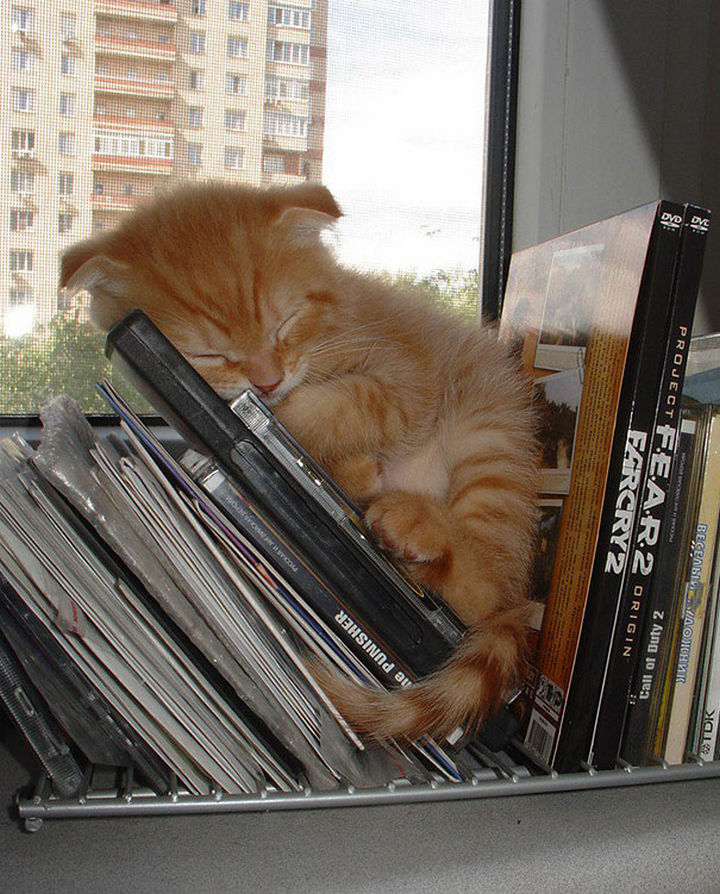 """24 Cats Asleep in a State of Bliss - """"Happy kitty, sleepy kitty, ..."""""""
