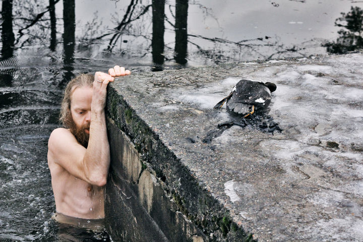He then quickly swam back to shore and lay the duck onto the docks. The bird ingested a lot of water and Lars performed mouth-to-mouth resuscitation to help save him.