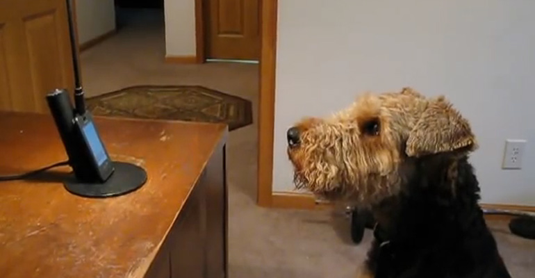 """Stanley the Talking Dog """"Talks"""" to His Mommy on the Phone."""
