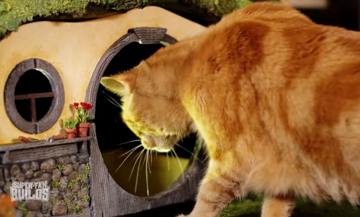 Cats don't need doors so a large entrance was built to allow both of them to enter and leave as they please.