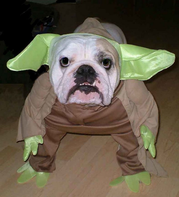 15 Things Only Bulldog Owners Will Understand - Bulldogs look perfect in almost any Halloween costume and they'll be proud to wear it.
