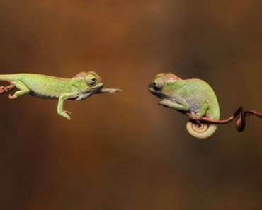 18 Cute and Adorable Reptiles That Will Make You Go Awww.