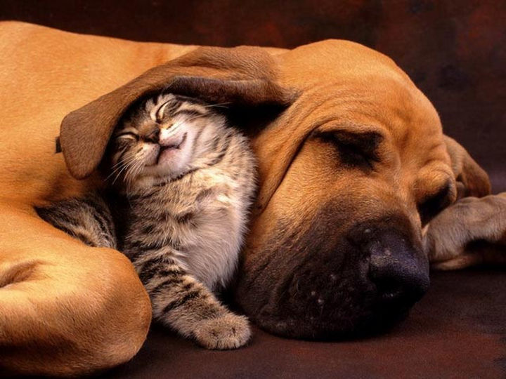 23 Dogs and Cats Sleeping Together - Warm and comfy.