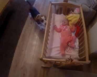 Charlie the Beagle Rocks Newborn Baby to Sleep.