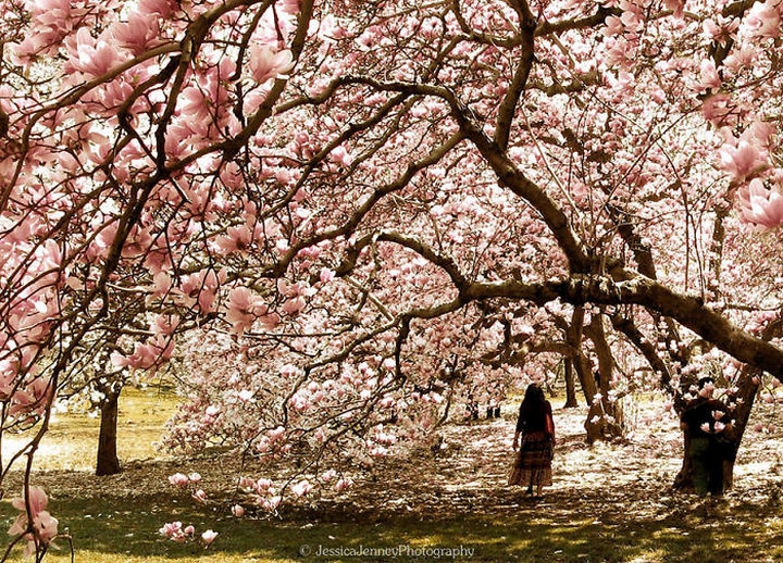 17 Pictures of the Prettiest Trees on Earth - Magnificent Magnolia
