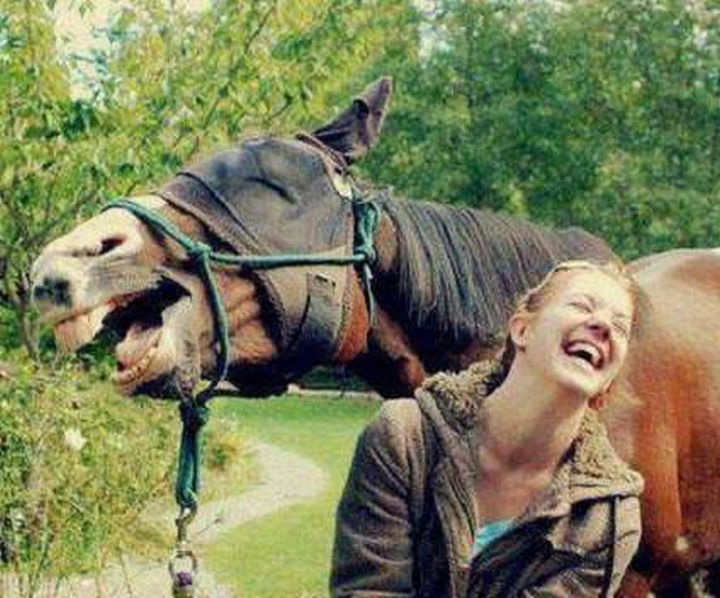 20 Beautiful Images Showing an Animal's Unconditional Love - Horse laughing with its trainer.
