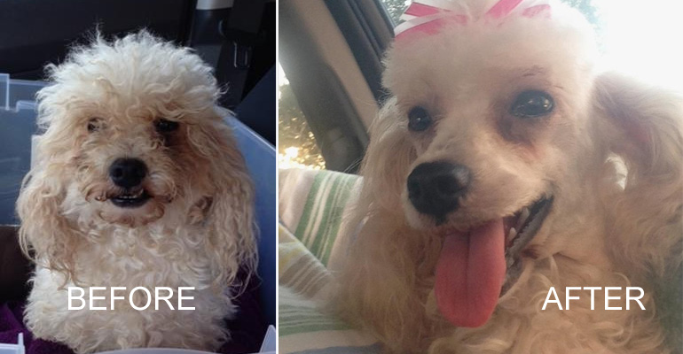 How One Picture Is Saving the Lives of Shelter Animals  Featured