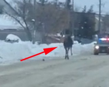 The Police Had to Escort This Animal out of the City and Fast.