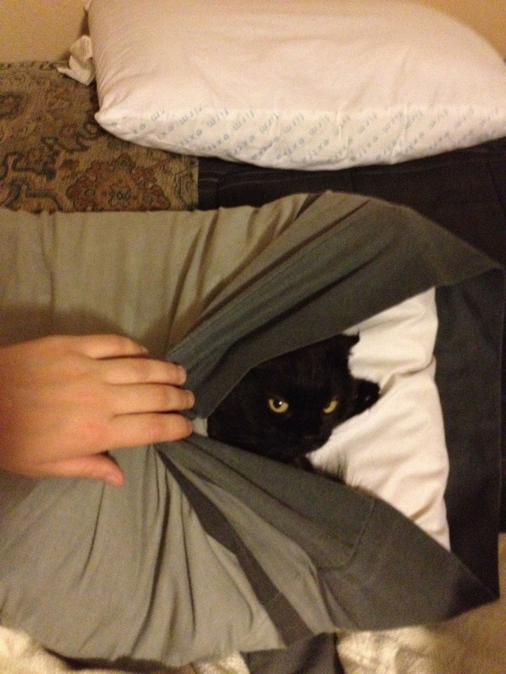 27 Stealthy Ninja Cats - You never know where they will hide.