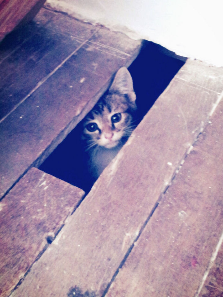 27 Stealthy Ninja Cats - They can fit anywhere.
