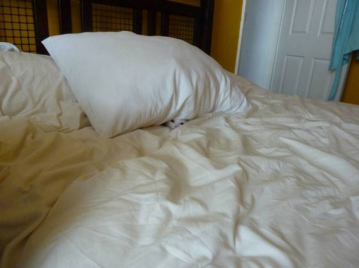 27 Stealthy Ninja Cats - Even ninja cats need some peace and quiet sometimes.