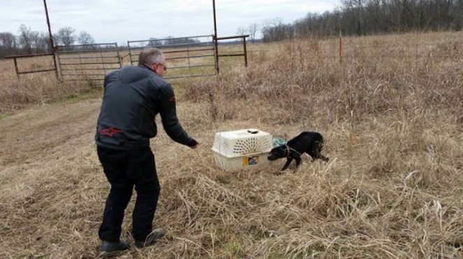 They opened the crate and found a poor emaciated dog inside.