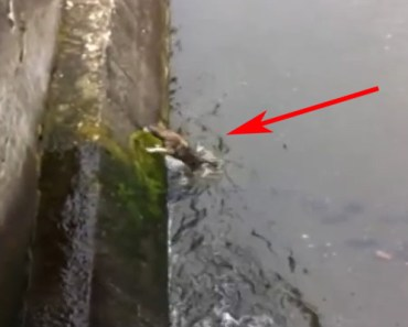 Dog Gets Rescued in an Icy River Canal in Romania.