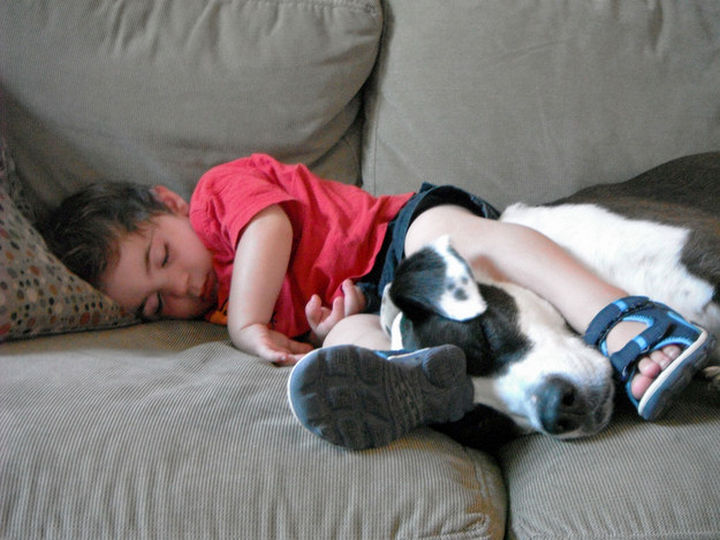 Reasons You Shouldn't Own a Pit Bull - They're always rough with children.