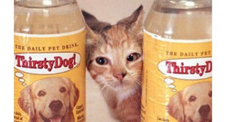 27 Failed Products - Thirsty Cat! and Thirsty Dog! bottled water.