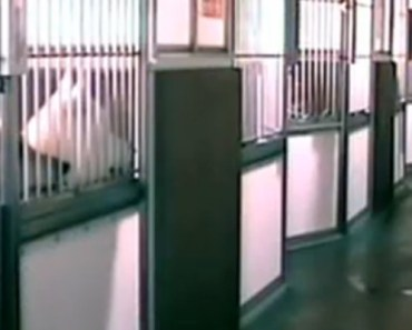 Dog Lets Other Animals out of Their Kennels and It's Hilarious.