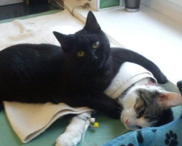 Poland Cat Nurses Other Animals in Shelter Back to Health.