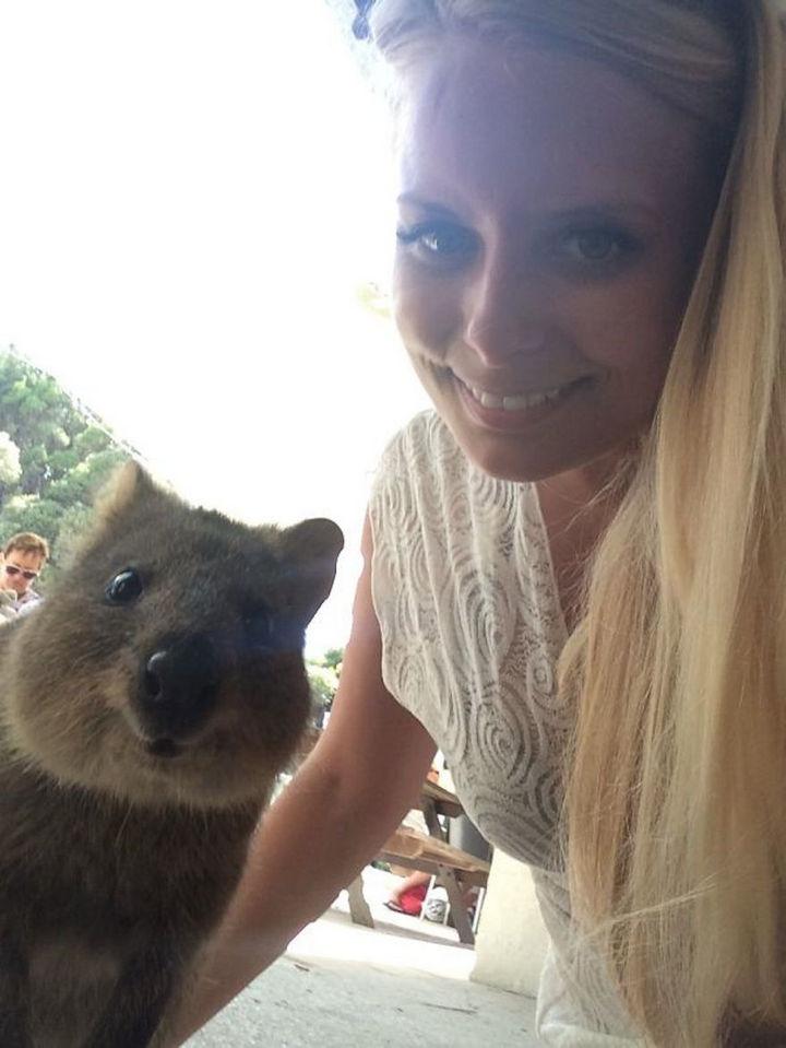 Quokka Selfie Trend - Image 1.