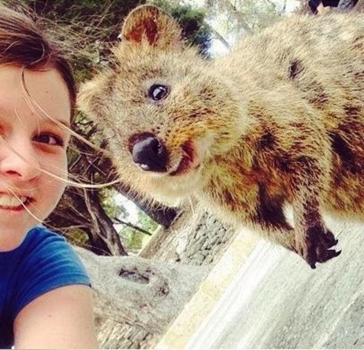 Quokka Selfie Trend - Image 11.