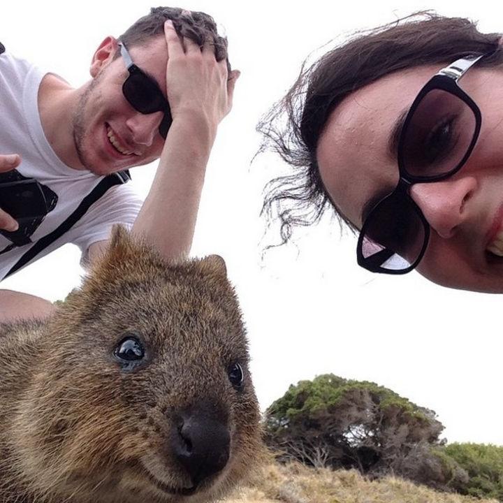 Quokka Selfie Trend - Image 15.
