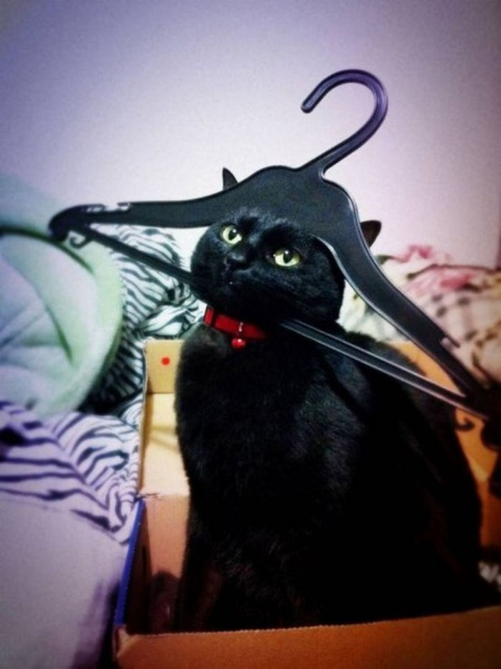 "15 Hilariously Curious Cats - ""I am Sir Mittens, if you post this on Facebook, you will pay!"""