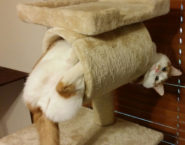 "15 Hilariously Curious Cats - ""Yes, mistakes were made. I accept that. Now help me out."""