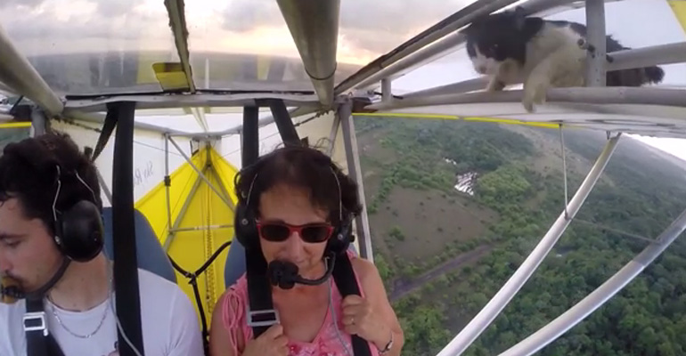Cat Emerges from Glider Plane Wing to Pilot's Disabelief