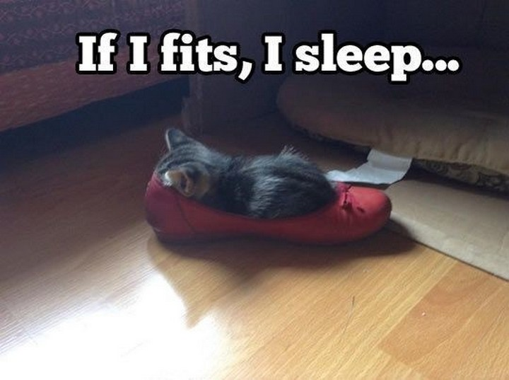 24 MORE Cats Asleep in a State of Bliss - A perfect fit.