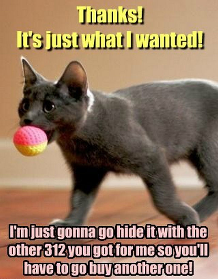 21 Cat Logic Photos - I'd be afraid of looking behind the couch.
