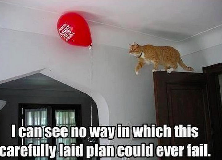 21 Cat Logic Photos - Nailed it?