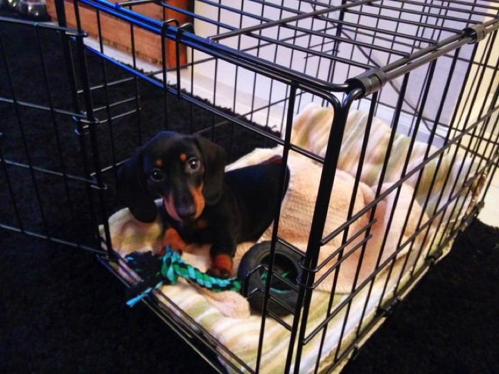 """28 Cute Dachshunds - """"My crate is almost as awesome as me."""""""