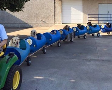 80-Year-Old Retiree Builds Dog Train for 9 Dogs He Rescued.