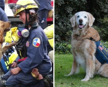 9/11 Rescue Dog Gets Treated to a 16th Bday Party in NYC.